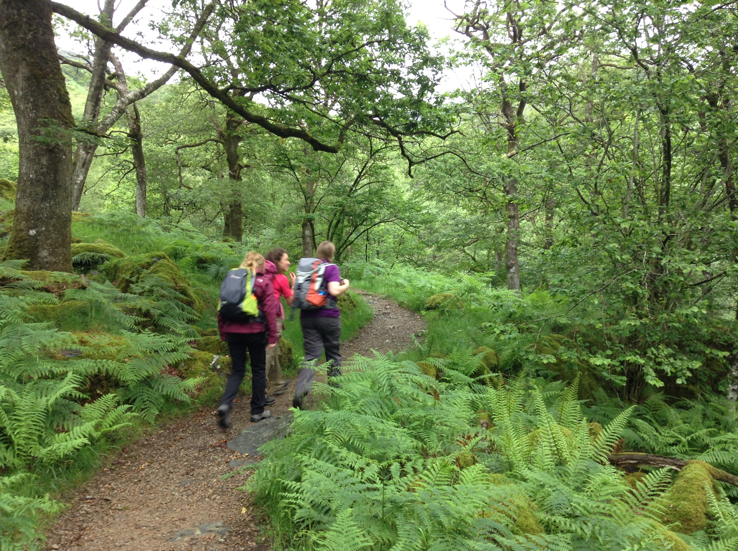 Woods at the start of the Watkin path