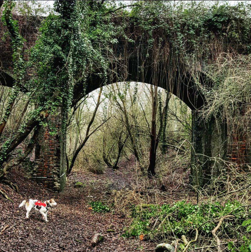 dog under old railway bridge