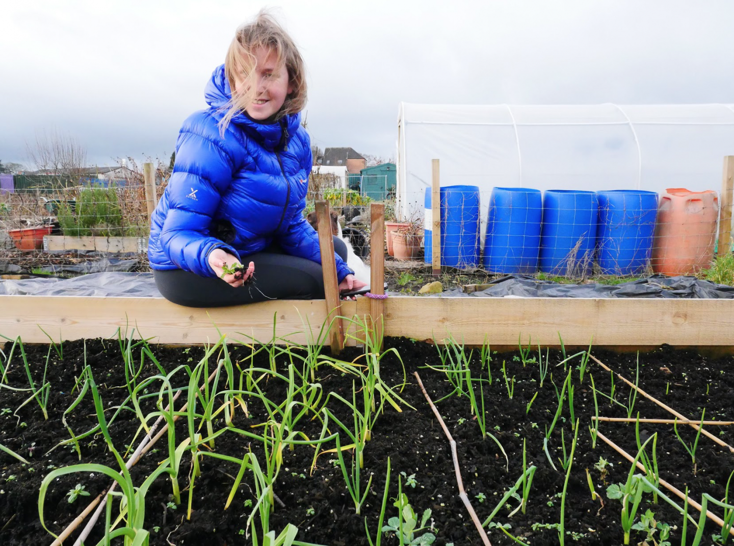 What is an allotment? & how it changed my life